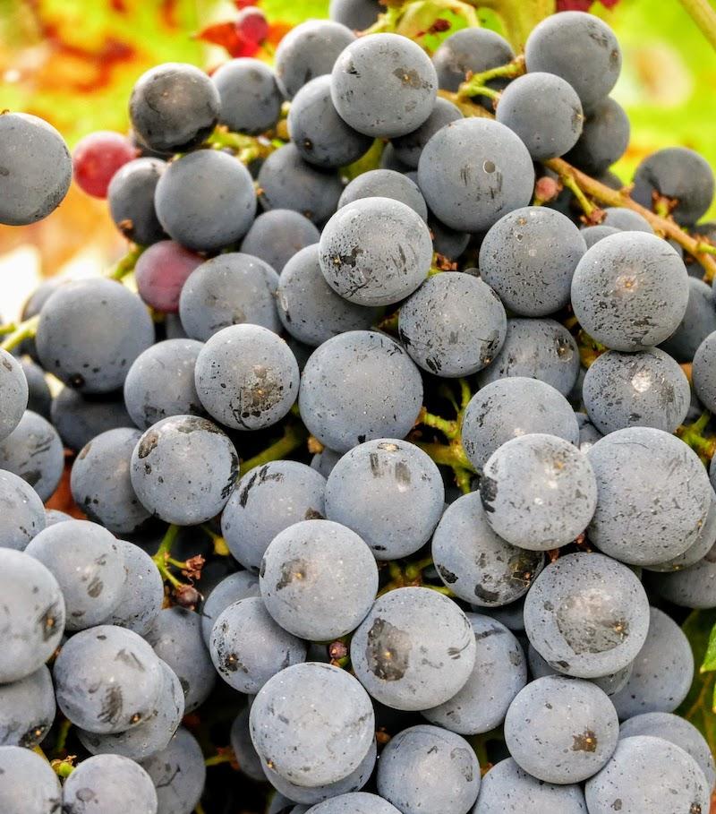 cultures certifiées raisonnées - vignobles pauquet